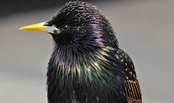 pesticides, harmful, damage, environment, killing, bees, birds, swallows, starlings, insect eating, insecticides, skylarks, at risk, food chain, decline, soil, water, supply, yellowhammers, crops,