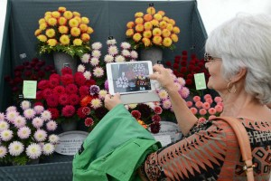 A visitor photographs the flower display on her tablet camera