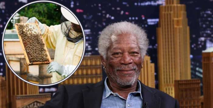 To-Save-The-Bees-Morgan-Freeman-Converted-His-124-Acre-Ranch-Into-A-Bee-Sanctuary
