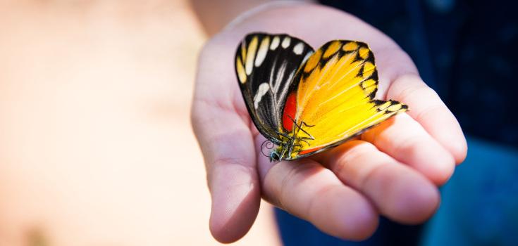 inset-butterfly-dead-735-350