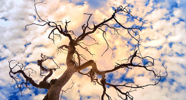 http://www.wakingtimes.com/wp-content/uploads/2015/07/Dying-Trees-Sky.jpg