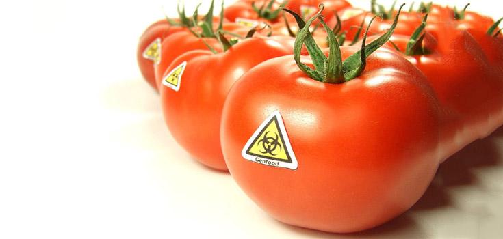 gmo_tomatoes_toxic_735_350