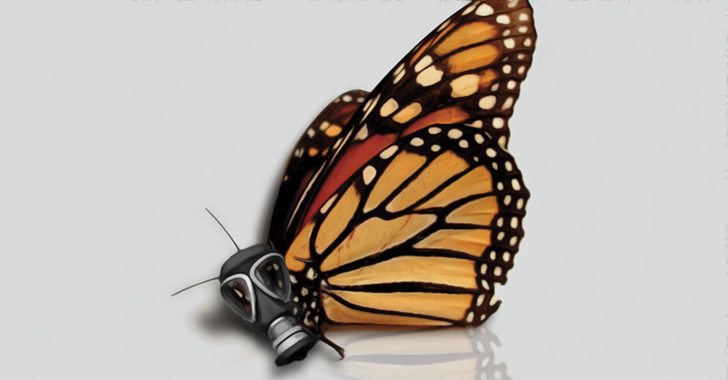 monarch-butterfly-population-down-80-monsanto-largely-to-blame