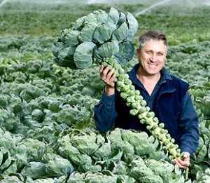 growers page main - cranwell
