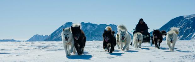EconEdLink-795-Sled-Dogs-Inuit-Economy