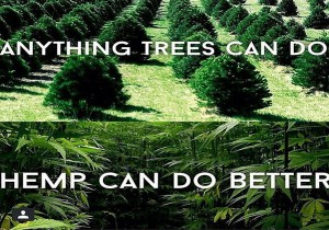 Hemp Could Free Us From Oil Prevent Deforestation Cure Cancer