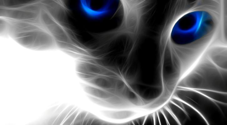 cat-726x400