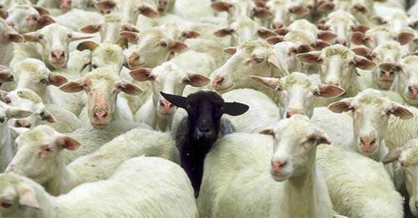 Radical conformist