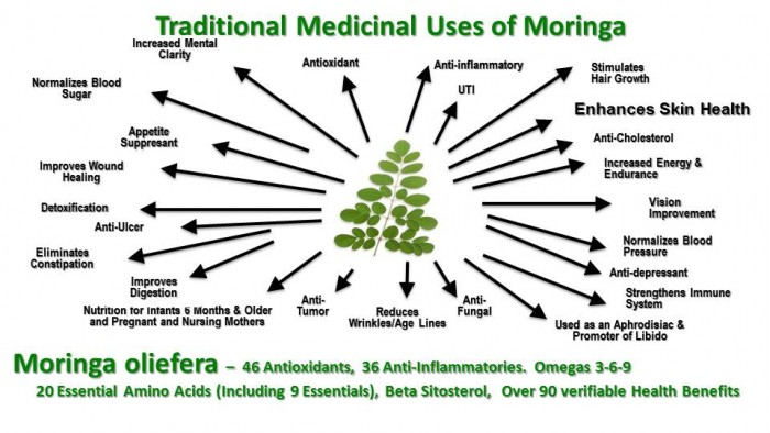 Traditional_Uses_Of_Moringa_-_HD_JPEG