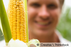 government corn subsidies