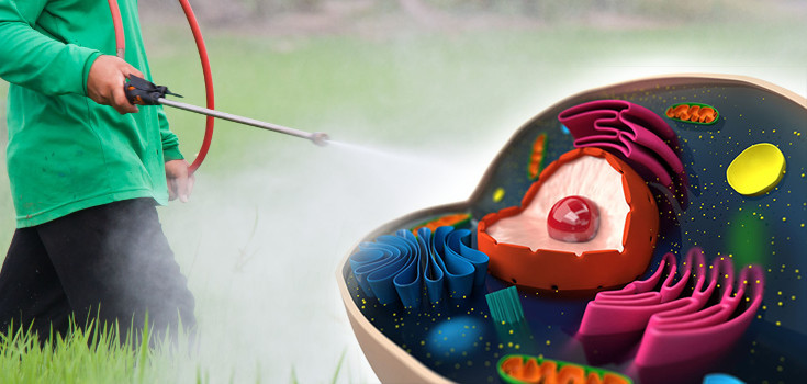 pesticides-Mitochondria-cell-735-350-2