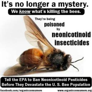 2015-07-15-1436982735-6127180-gmocorntreatedwithneonicotinoidspesticidesmanufacturedbyBayerSyngentakillbees
