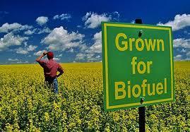 hemo biofuel