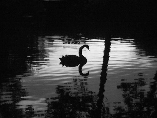 economy collapse black swan