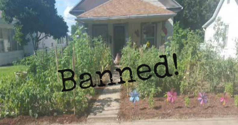front yard garden. garden Govt Bans Growing Food  Forces Family to Destroy Front Yard Garden