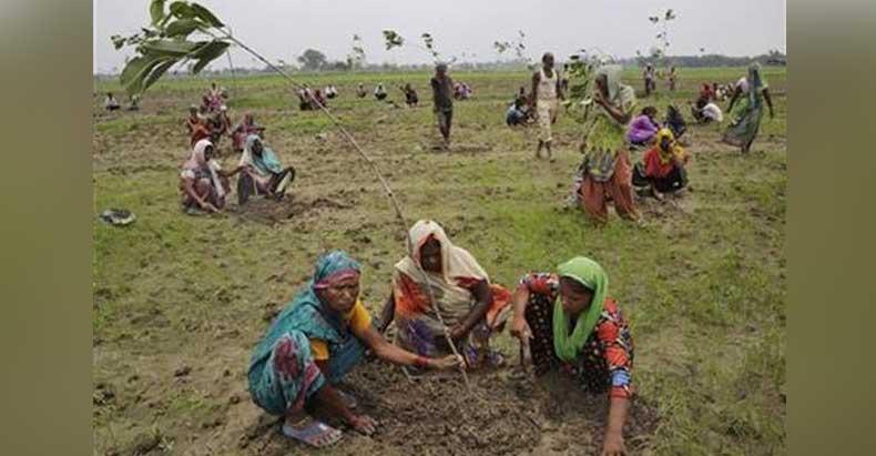 india-planting-trees