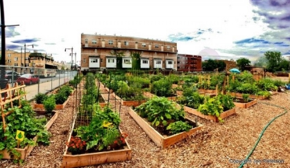 Image: These raised bed gardening tricks beat traditional gardening every time