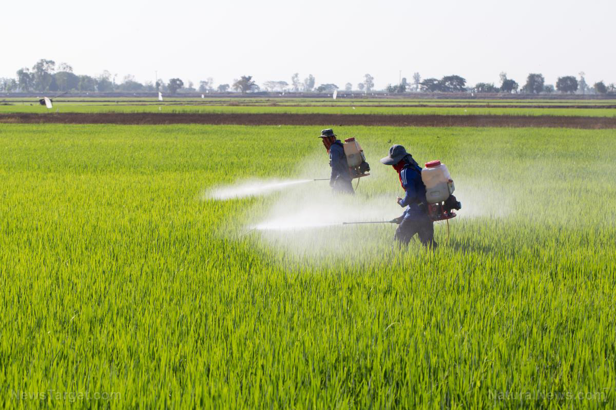 Image: WARNING SIGNS: Code words in latest executive order indicate Trump may be getting sucked into the GMO / pesticide swamp