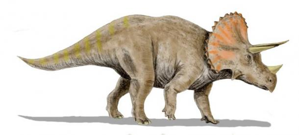 Classical reconstruction of a Triceratops