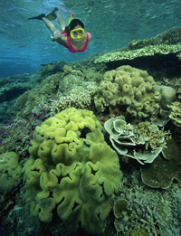 Sunscreen Ingredients awakens viruses that kill coral reefs