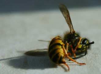 deadbee