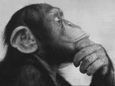 http://www.philosophers-stone.co.uk/wp-content/uploads/2017/10/monkey-thinking.jpg