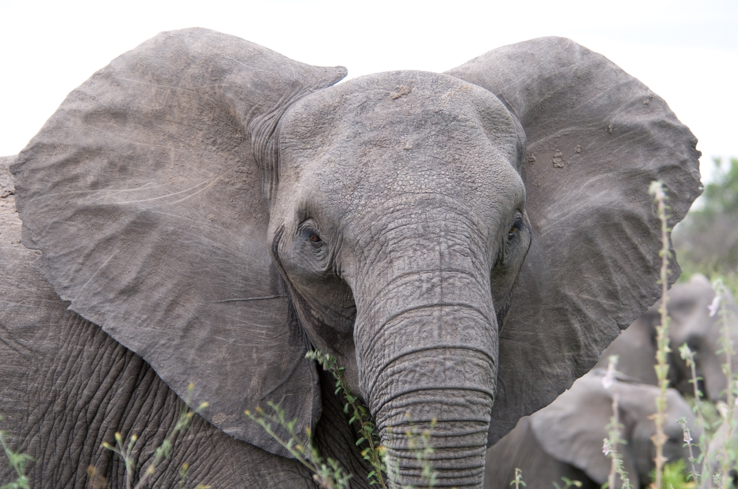 Image: President Trump saves the elephants of Zimbabwe: Big game hunting trophy ban to remain in place