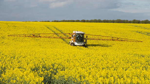 Image result for Oilseed rape